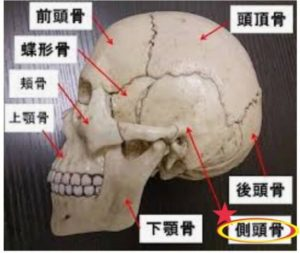 コラム】小顔になるために重要な骨『側頭骨』 | 大分市東津留のエステ ...